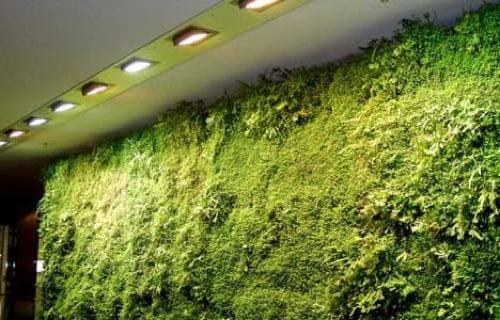 Yeşil Ev Dekorasyonu (1)
