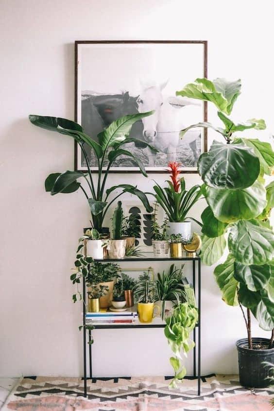 Bitkilerden oluşan bir raf