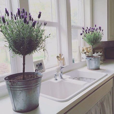 Vintage tarzı bir mutfak için kır bitkileri