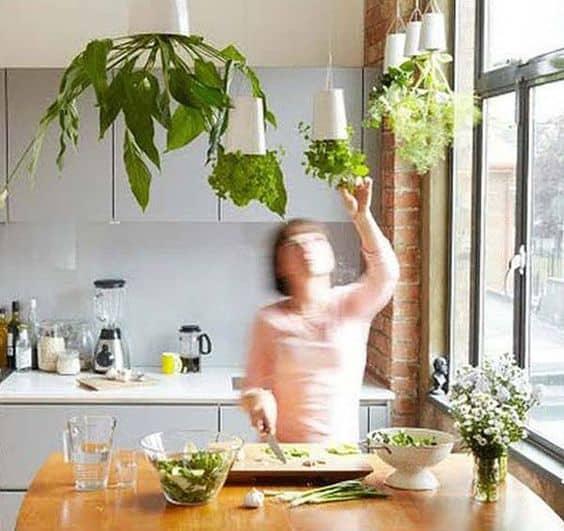 Bitkilerinizi tavandan asarak daha da özgün olun
