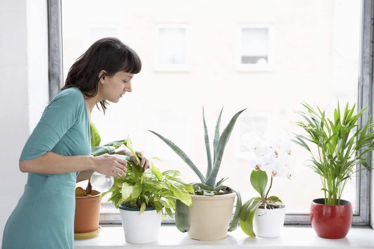 1615449708 338 Kisin ic mekan bitkilerinin bakimi icin ipuclari