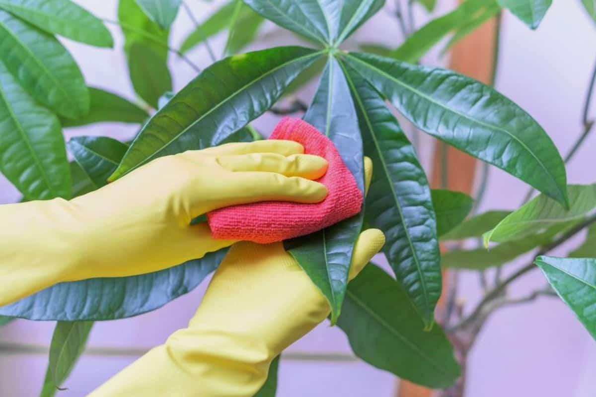 1615449709 618 Kisin ic mekan bitkilerinin bakimi icin ipuclari