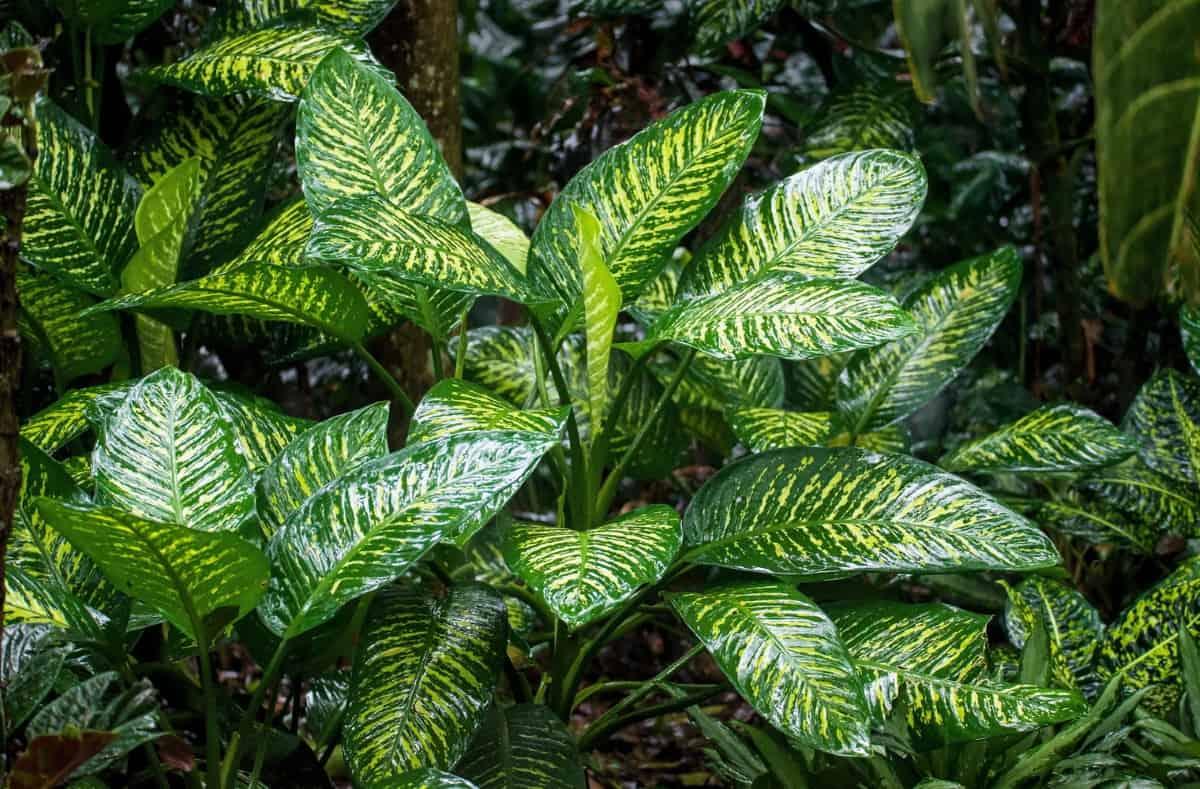 bitki bakımı için uygulamalar