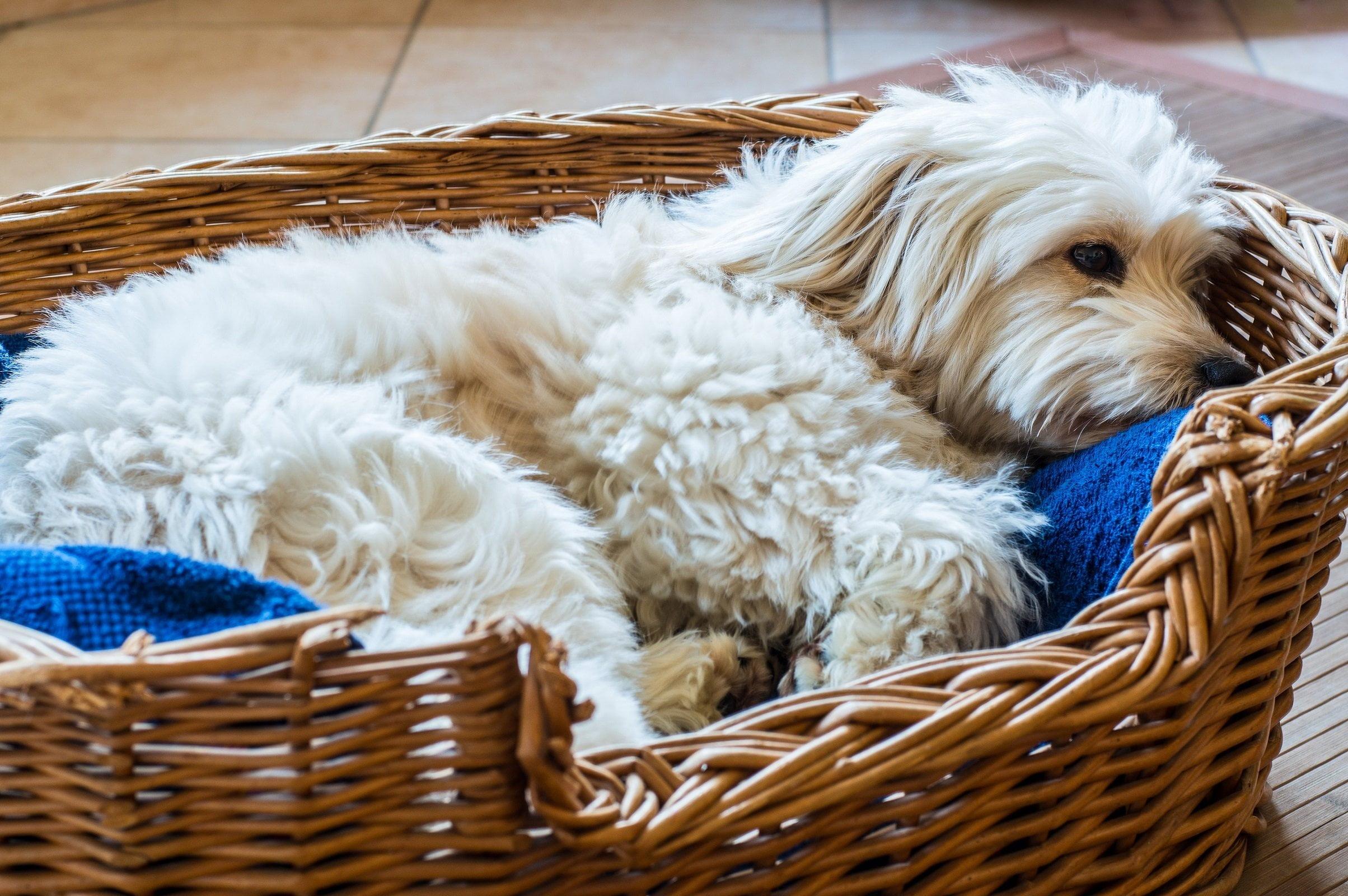 Evcil hayvanınız için pratik yatak takımı fikirleri