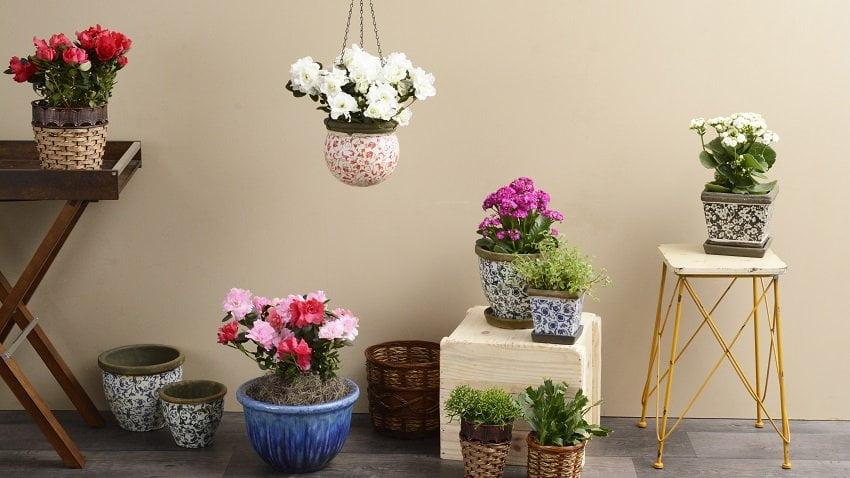 Bitkilerle ve dekore etmek nasıl yapılır?