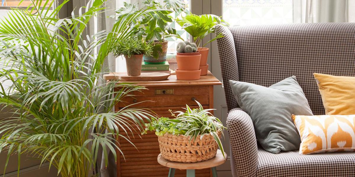 Oturma odası için bitkilerin dekorasyonu