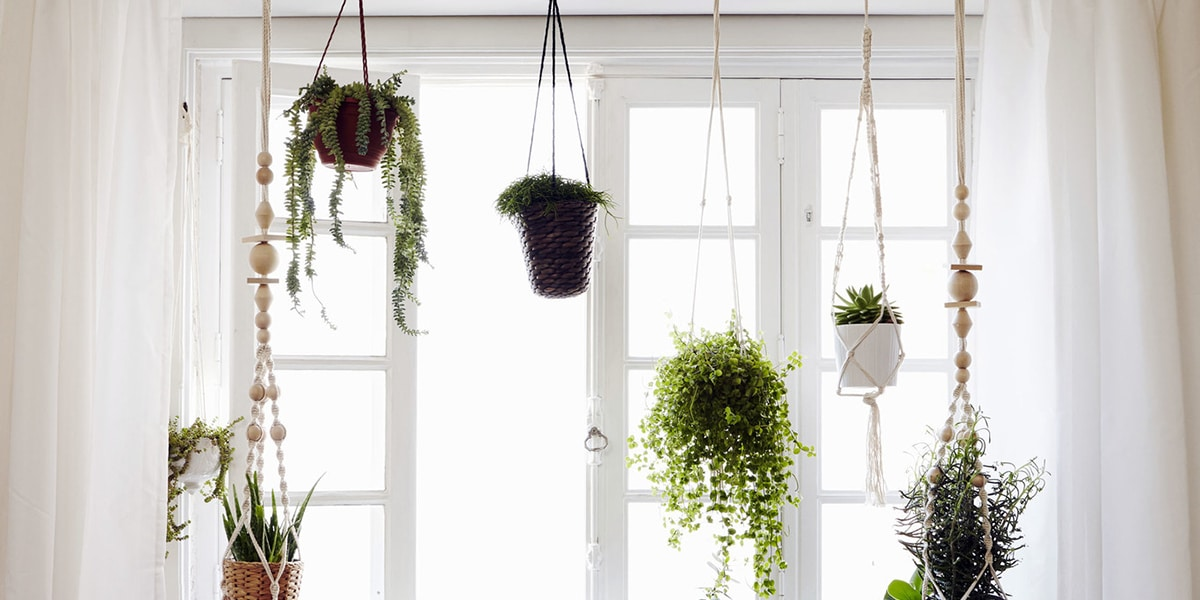 Asılı bitkiler