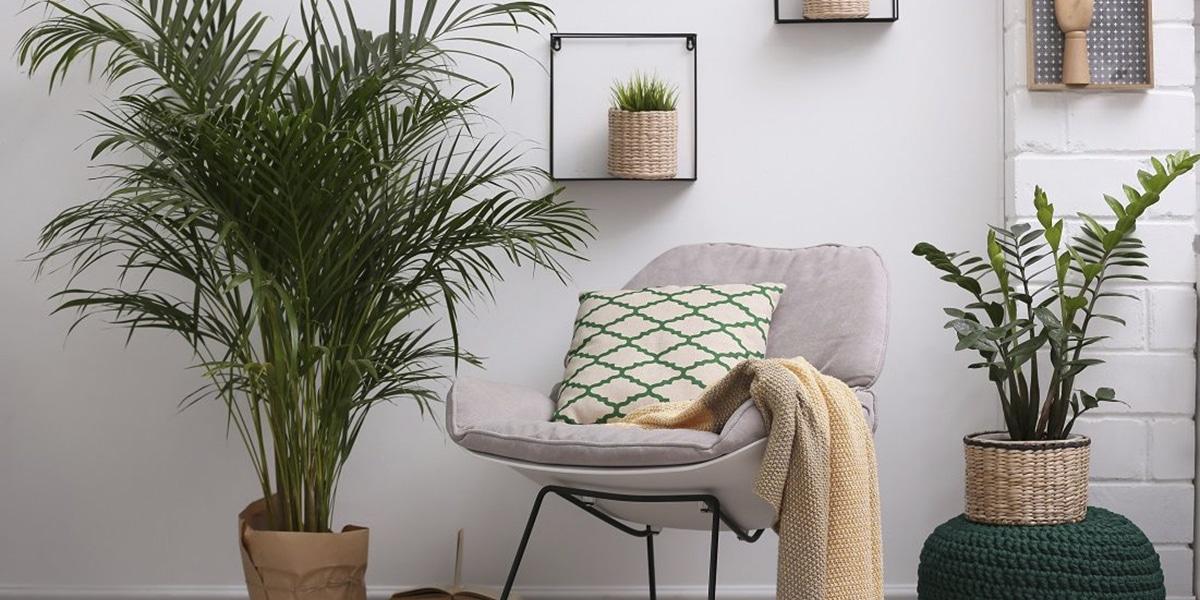Oturma odası için bitkiler