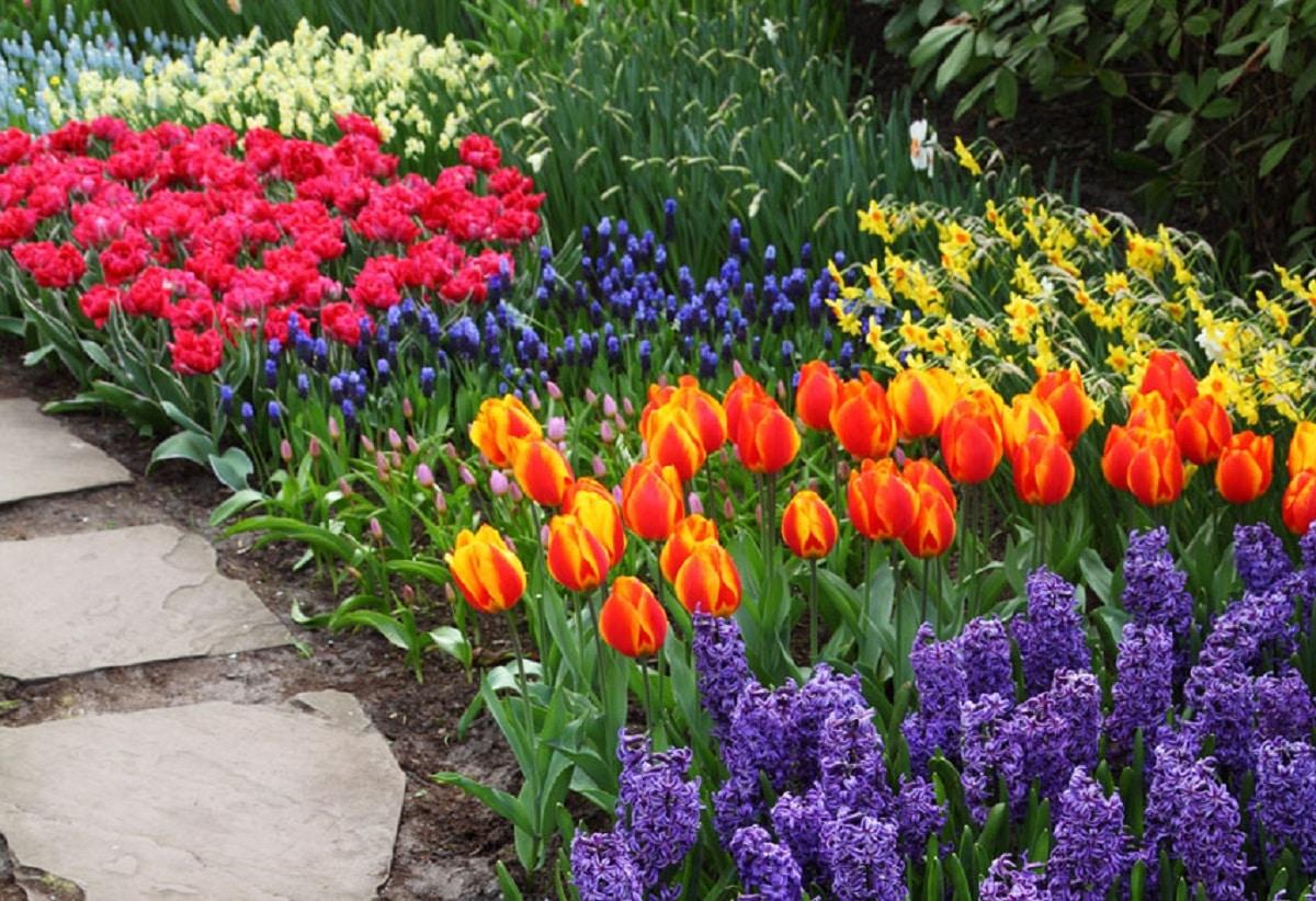 Küçük bahçeler için çiçekler