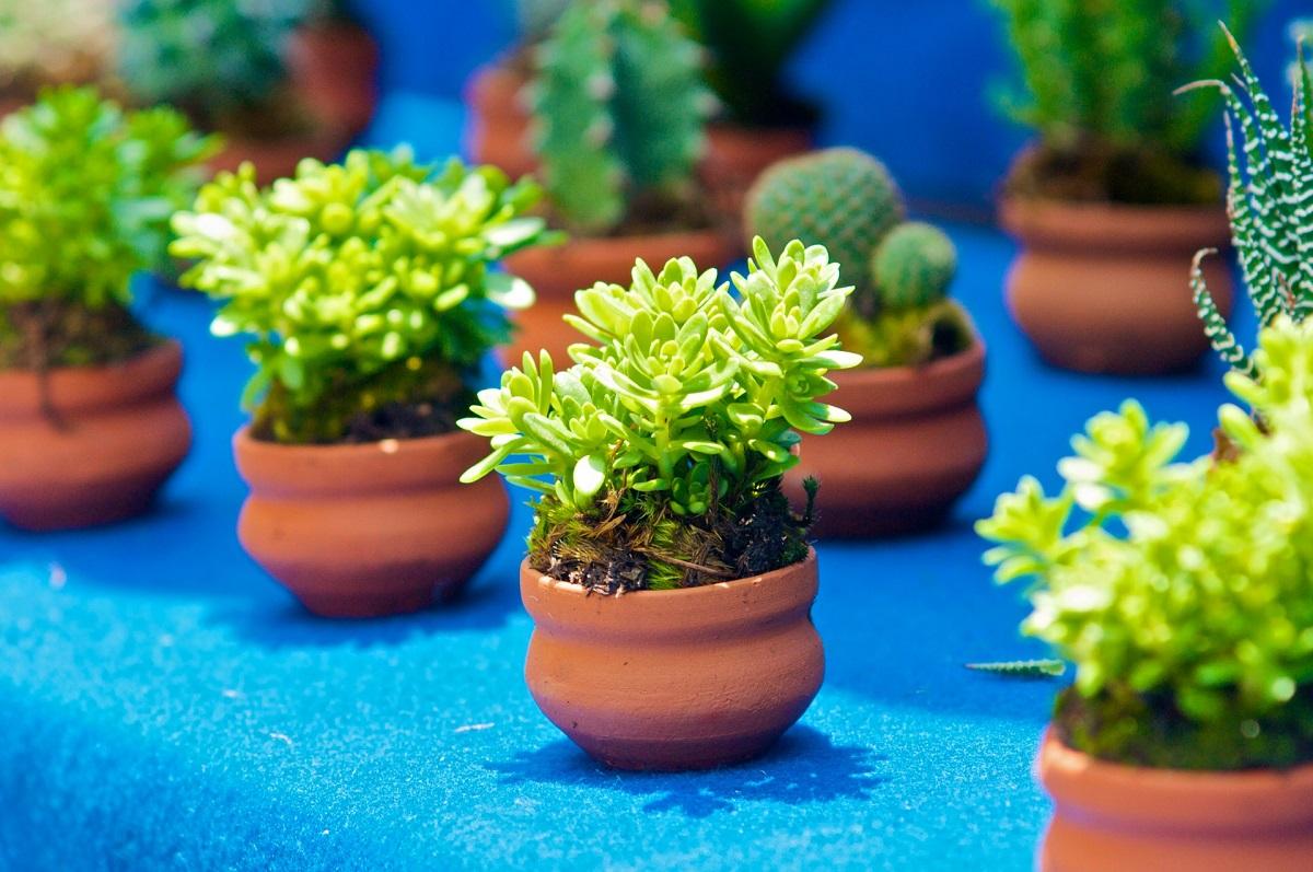 Küçük bahçeler için saksılar