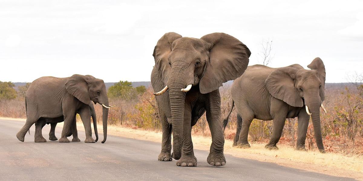 Kruger Ulusal Parkı'nı ziyaret edin