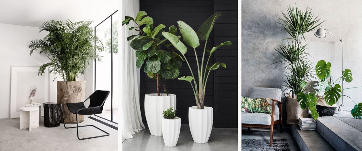 Plantas de interior altas