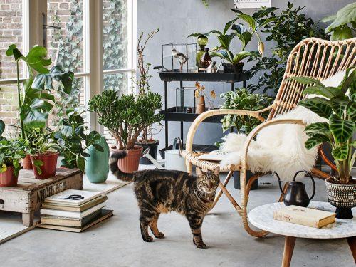 kiralanmış bir evi bitkilerle dekore etmek