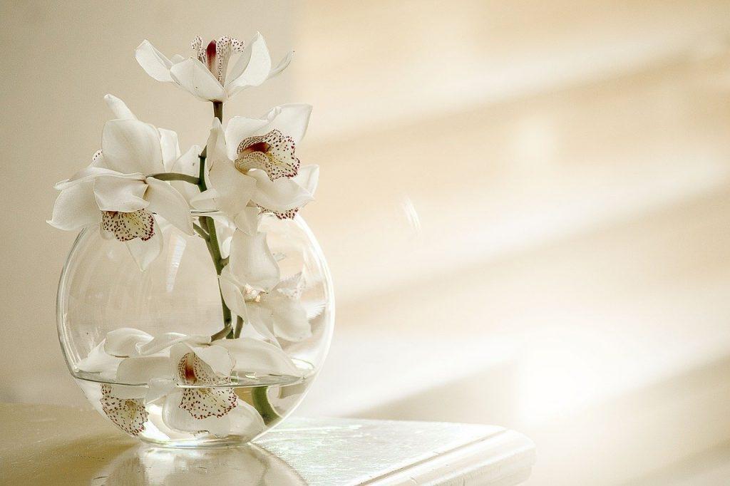 yatak odası için uygun bitkiler: orkide