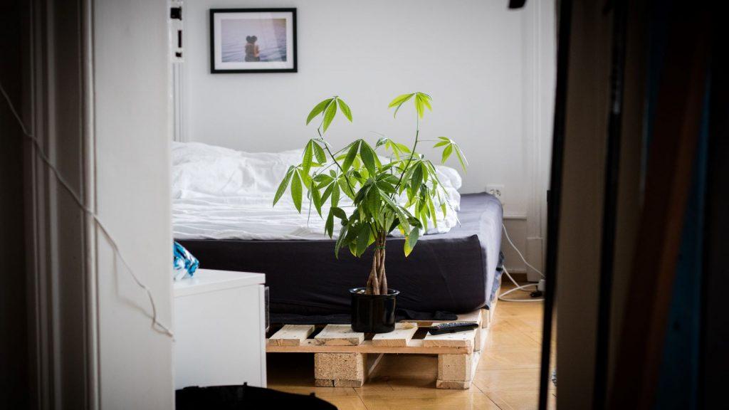 yatak odasında bonsai