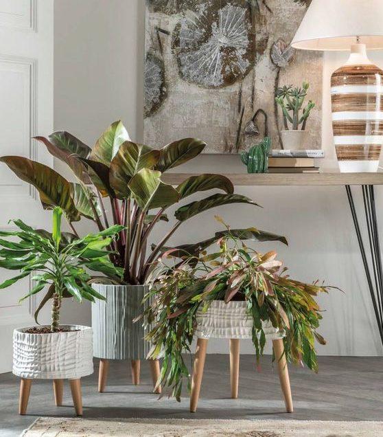 evde tutulması gereken bitkiler
