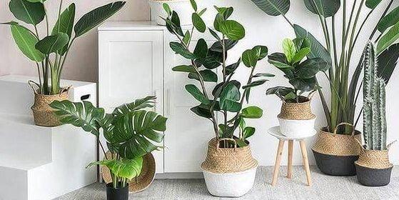Havayı temizleyen iç mekan bitkileri