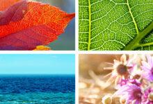 Dogadan ilham alan renk paletleri