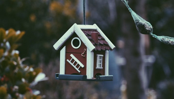 kuş evi